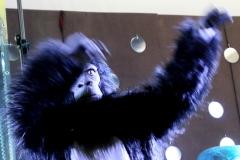 OrchestraBassissi2017_scimmione_7616c_rid